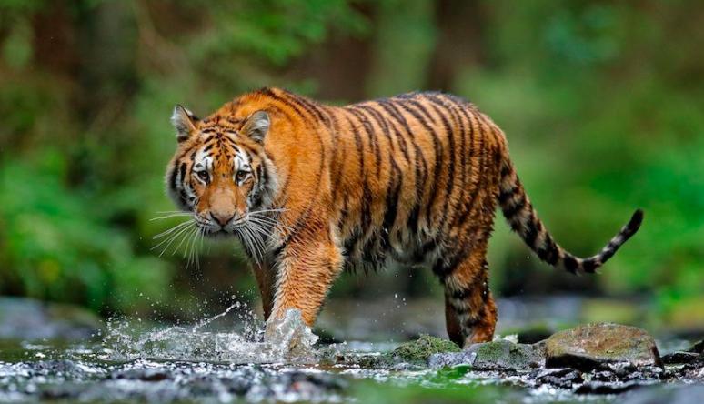Tiger explained using Eigenvectors & Eigenvalues