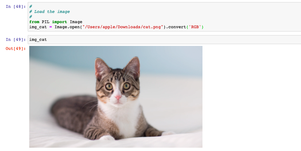 Load the cat image for prediction using ResNet 101 layers deep neural network